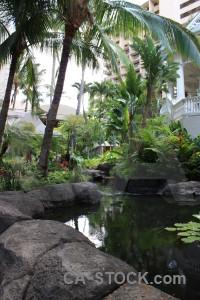 Water green pool.