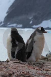 Water ice wilhelm archipelago rock antarctica.