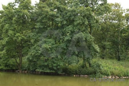 Water lake green tree.
