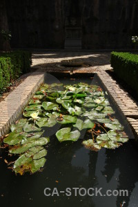 Water lily fortress alhambra la de granada water.