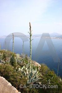 Water nature sea plant javea.
