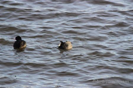 Water pond aquatic animal bird.