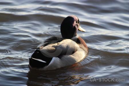 Water pond aquatic bird animal.