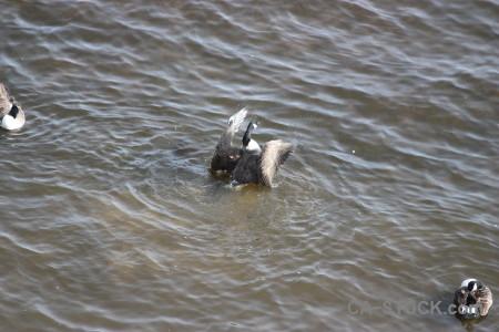 Water pond bird animal aquatic.