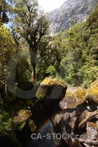 Water river new zealand cleddau tree.