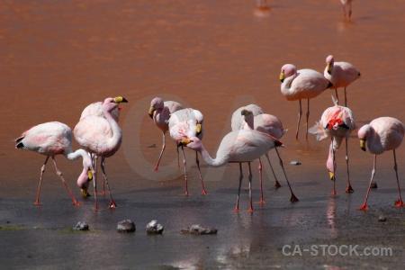 Water salt lake bird bolivia andes.