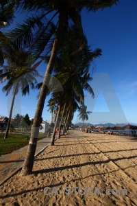 Water sand vietnam palm tree shadow.