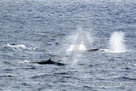 Water sea animal drake passage whale.