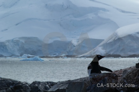 Water sea antarctic peninsula antarctica cruise.
