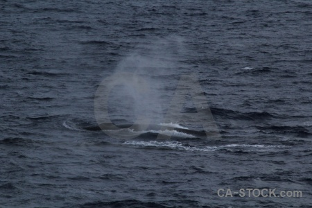 Water spray whale drake passage antarctica cruise.