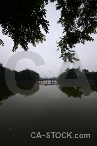 Water tree reflection hanoi hoan kiem lake.