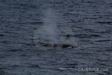 Water whale drake passage day 4 spray.