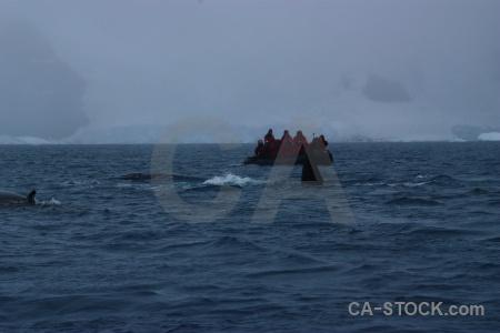Water wilhelm archipelago snow penola strait whale.