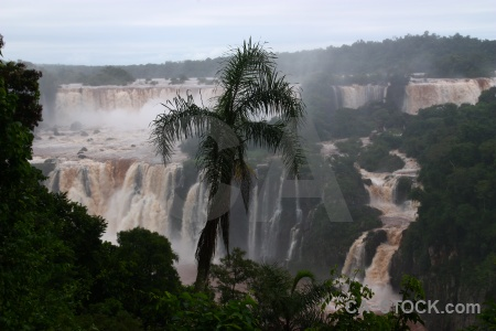 Waterfall tree river south america iguacu falls.