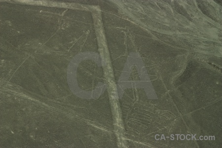 Whale aerial nazca animal lines.