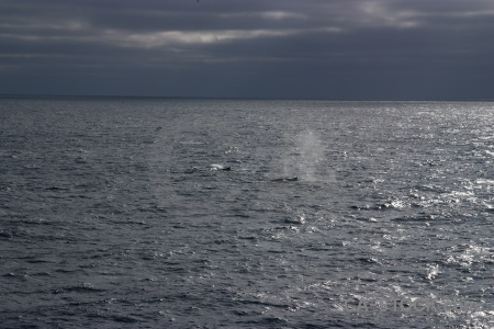 Whale water cloud day 4 drake passage.