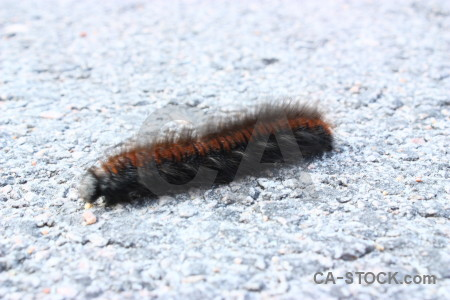 White animal caterpillar insect.
