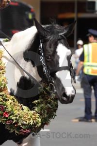 White animal horse.