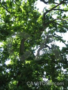 White branch tree leaf green.
