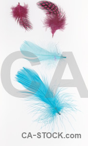 White feather cyan object.