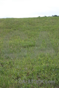 White field grass green.