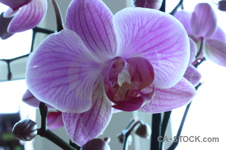 White flower orchid purple plant.