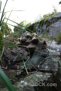 White fungus toadstool mushroom green.