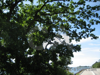 White green branch leaf tree.