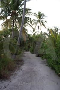 White green path.