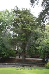 White green tree single.