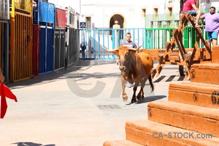 White horn bull animal orange.