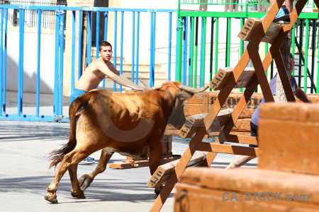 White javea person spain bull.