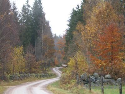 White path.