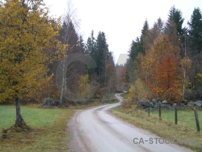 White path green.