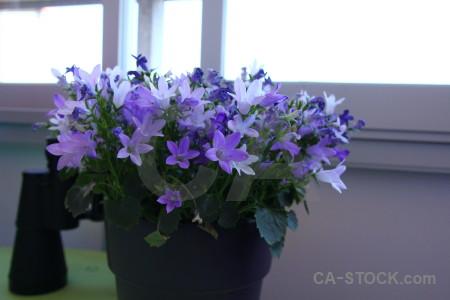 White plant pot flower.