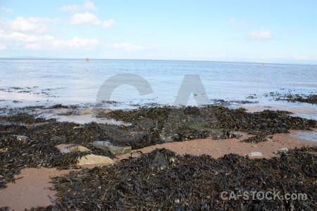 White rock landscape coast seaweed.