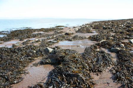 White seaweed coast rock landscape.