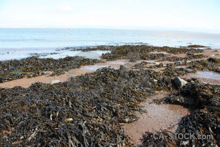 White seaweed rock landscape coast.