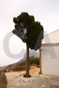 White single tree.