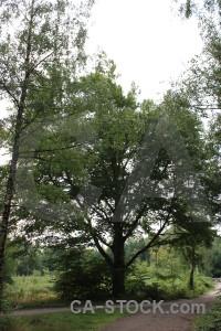 White single tree green.