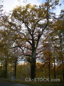 White tree single.