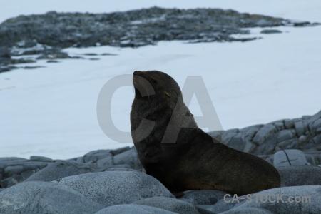Wiencke island dorian bay snow antarctica cruise seal.