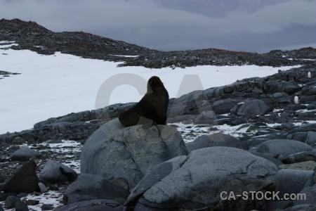 Wiencke island fur seal antarctica cruise sky.