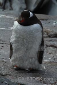 Wilhelm archipelago antarctica rock animal south pole.