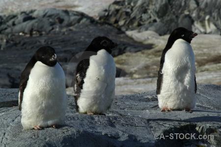 Wilhelm archipelago day 8 antarctica cruise snow ice.