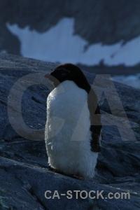 Wilhelm archipelago petermann island antarctic peninsula rock chick.