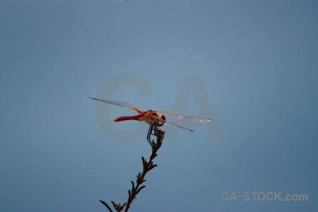Wing sky javea branch dragonfly.