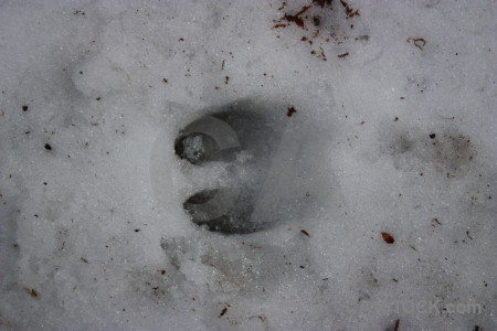 Winter gray snow.