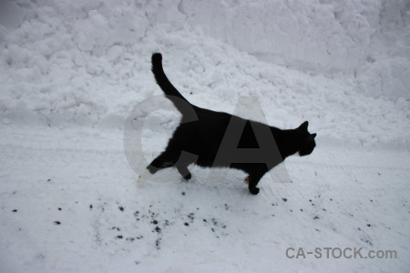 Winter snow gray cat animal.