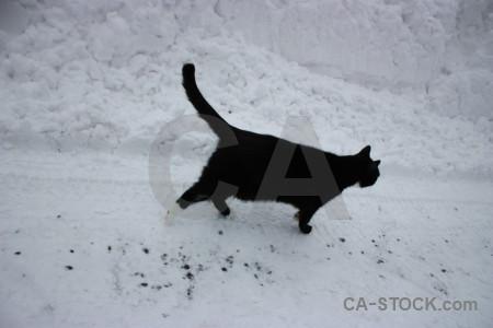 Winter snow gray cat animal.